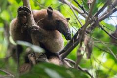 Corcovado National Park, Costa Rica, Centroamerica